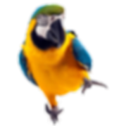 parrot_PNG722.png