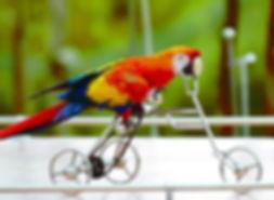 bird-bike.jpg