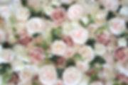 DSC_0430_edited_edited.jpg