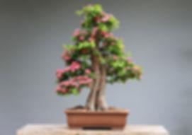 bonsai-3125721_960_720.jpg