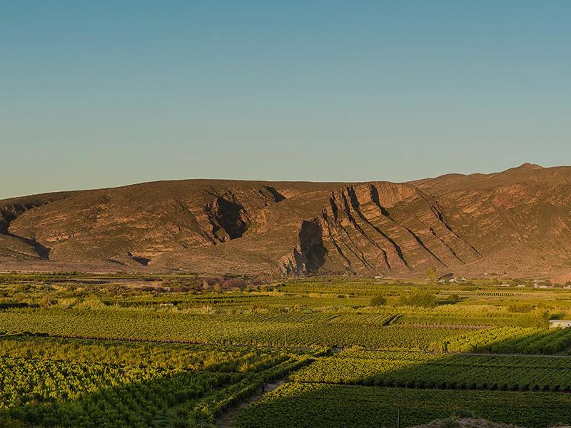 Boplaas vineyards in Calitzdorp, Klein Karoo