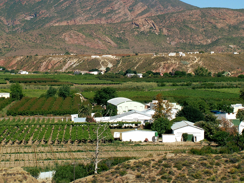 De Krans vineyards in Calitzdorp, Klein Karoo