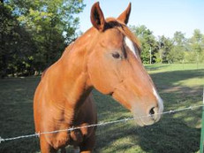 Old Joe the Paint Pony