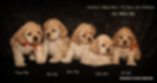 Castle and Jewel puppies 6 weeks.jpg