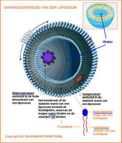 liposoom