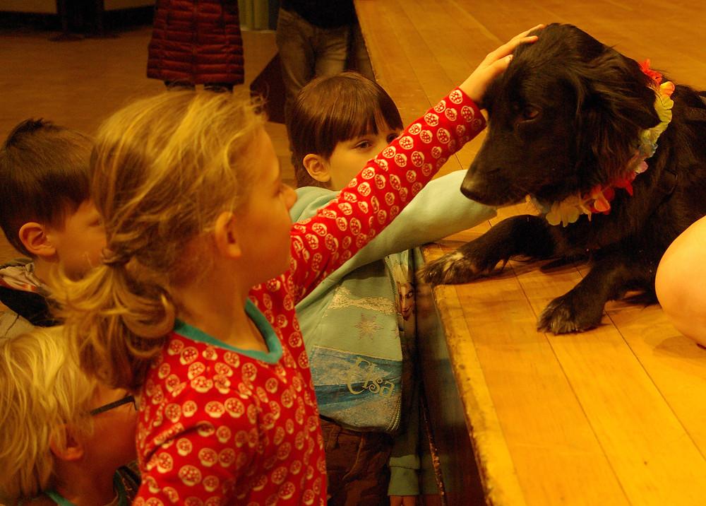 Sturmvogel  | Hund Schule
