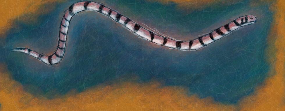 Crocker's Sea Snake