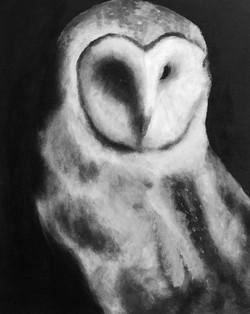 Least Concern: Farm Owl