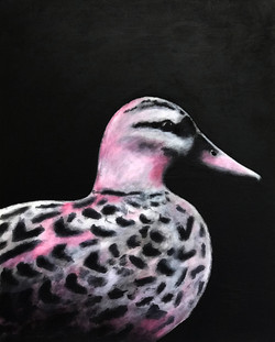 Endangered: Hawaiian Goose