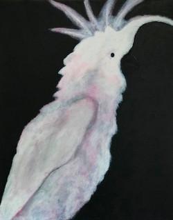 Endangered: White Parakeet