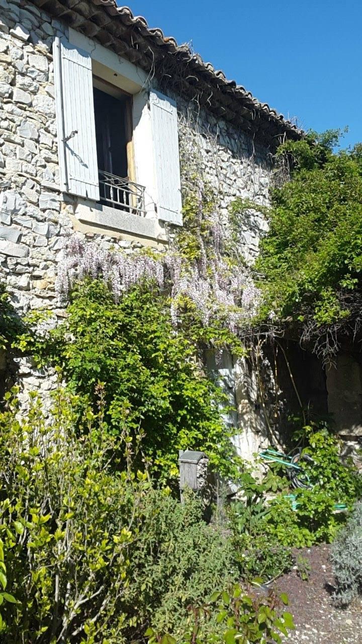 window wisteria