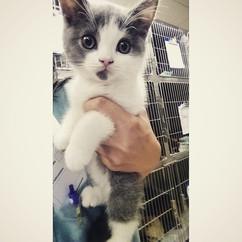 Cutest Kitten Ever!!!.jpg