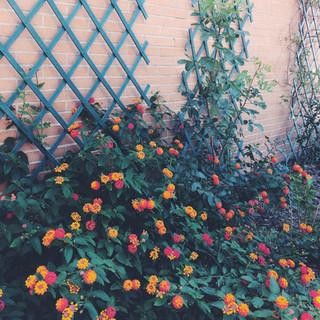 Summertime flowers.
