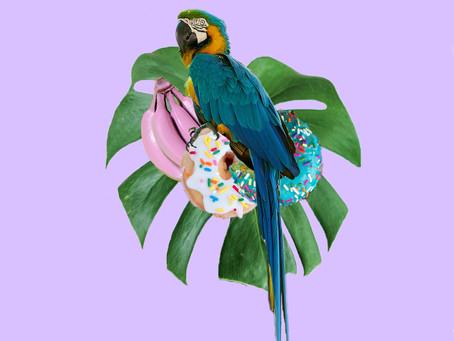 Pájaro azul que anuncias la mañana