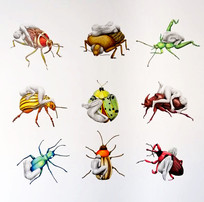 Coleóptera