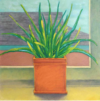 Aloe at the Window test.jpg