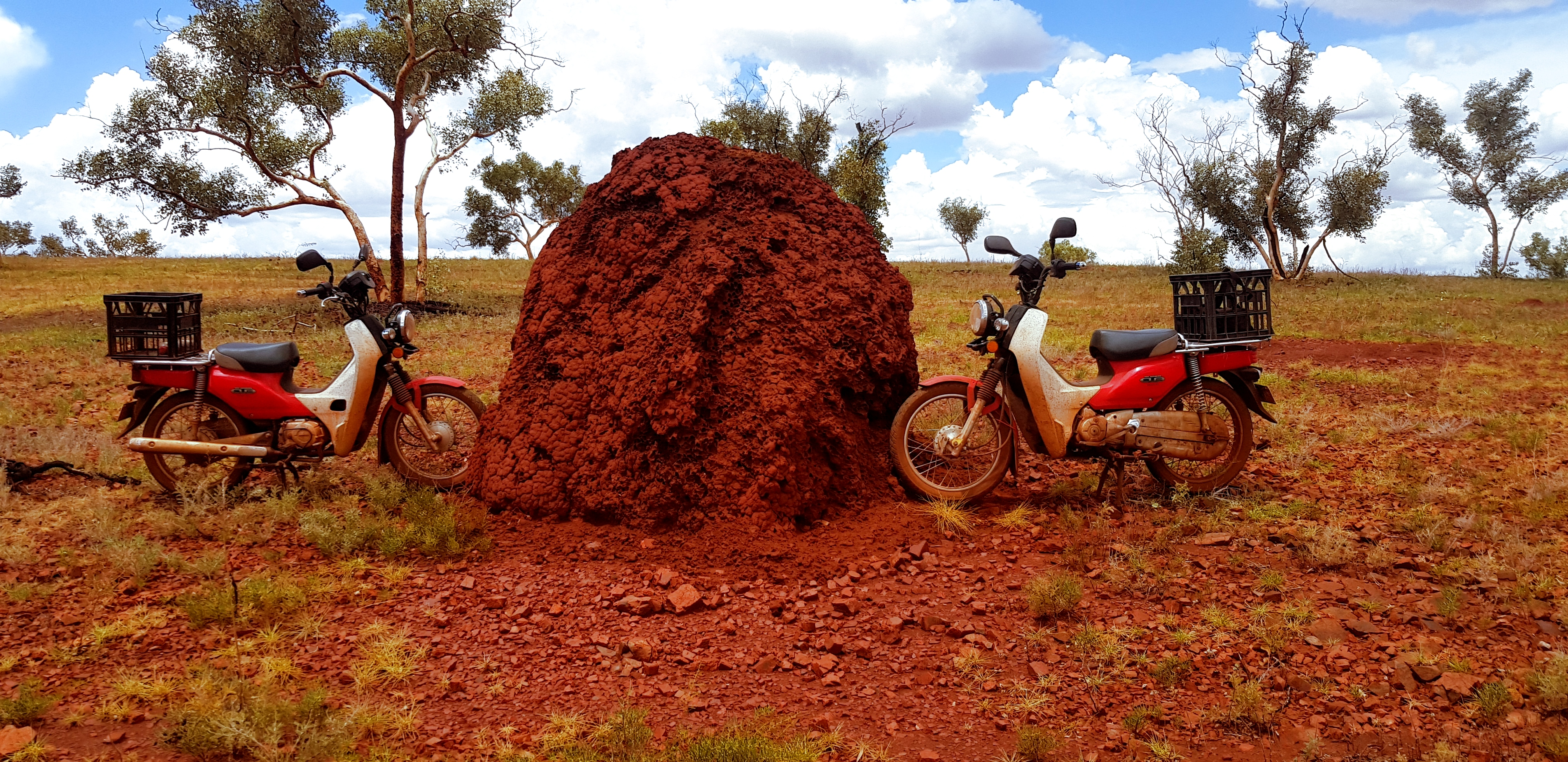 Termite mound vs Honda Cub NBC110