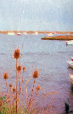 Teasels and the quay