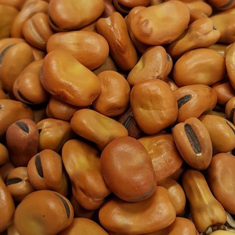 Faba Beans (Fava)