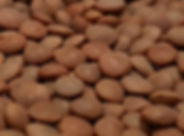 Whole Red Lentils.jpg