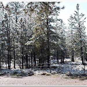 Bryce Canyon Pines, Bryce, UT