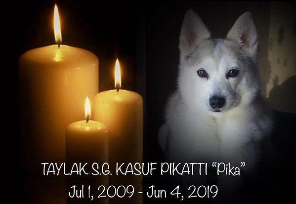 pika memorial.png