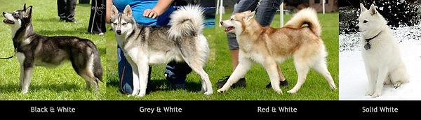 colorvarieties01_edited.jpg