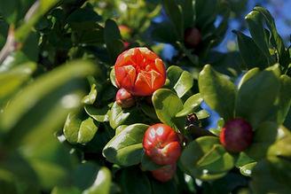 Árvores e arbusto de fruto