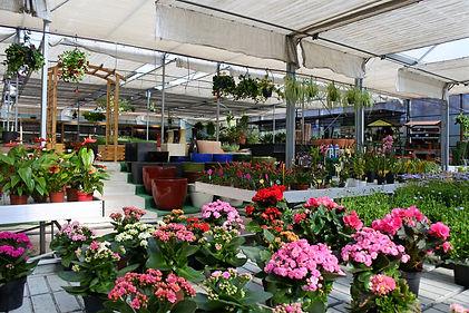 Centro de Jardinagem, Arbovita Agricultura e Lazer