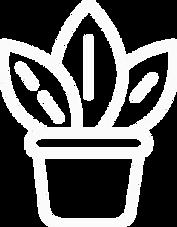 Arbovita - Aluguer de Plantas