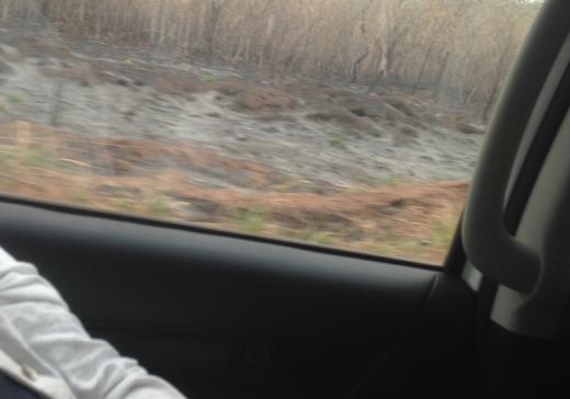Der Blick geht aus dem Fenster eines Autos. Man sieht verschwommen einen teils abgebrannten Wald. Die Bäume, die noch stehen sind kahl. Vorne befindet sich viel Asche.
