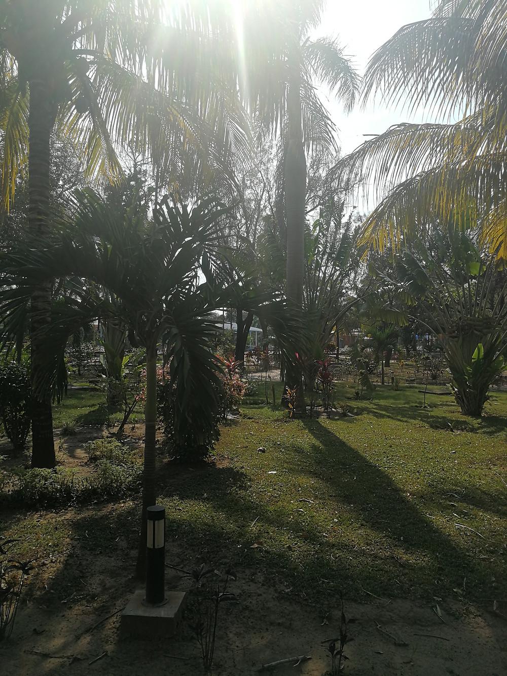 Zu sehen ist eine Grünfläche mit vielen Palmen drauf, durch die die Sonne durch scheint.