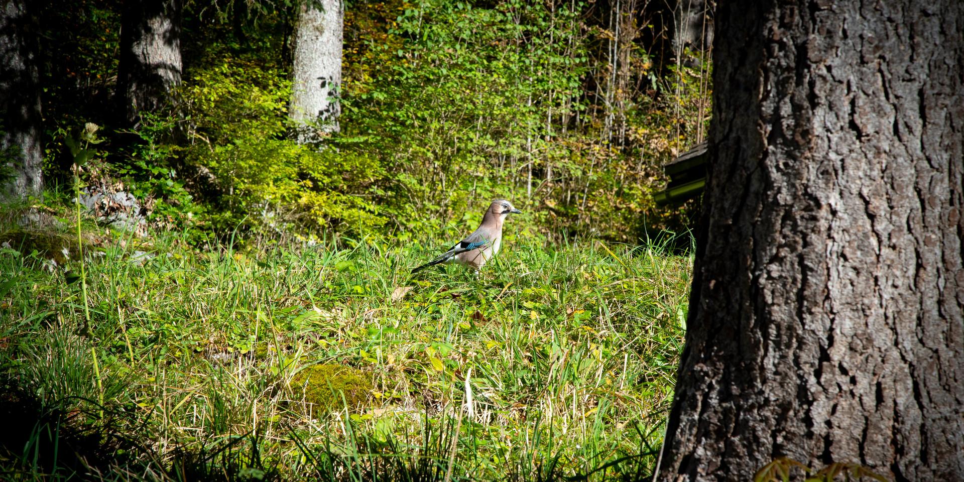 Vogel Obersee Näfels
