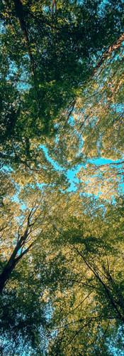 Forrest_wallpaper_arek.JPG