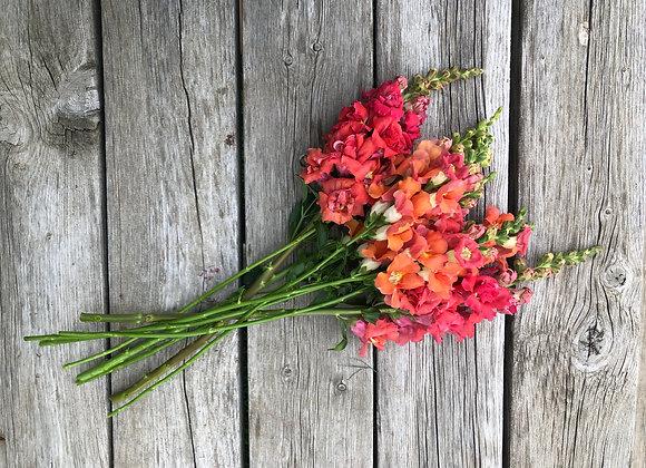 Snap Dragon Bouquet