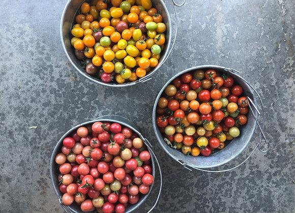 Cherry Tomato (1 pint)(red)