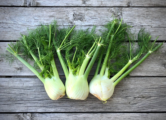 Fennel (2 heads)