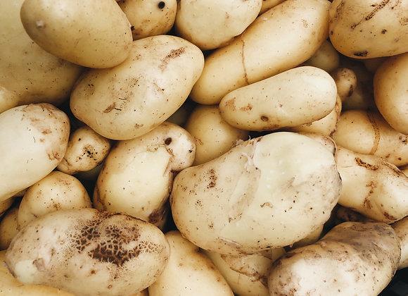 Med/Lg Sieglinde Potatoes
