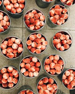 Blushing Star peaches are just the prett