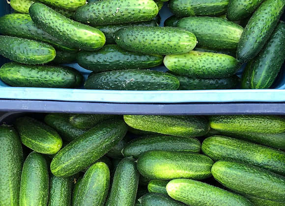 5 lbs Pickling Cukes (med/large)
