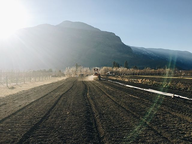 Seeding fall rye🌾Giving the soil some m