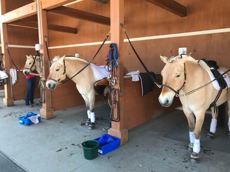 Little Bit Horse Show
