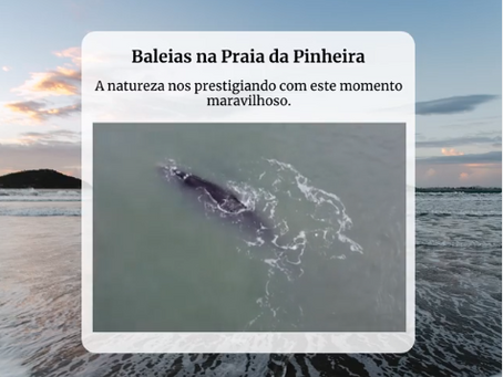 Baleias na Praia da Pinheira