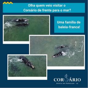 Olha quem veio visitar o Corsário de frente para o mar?