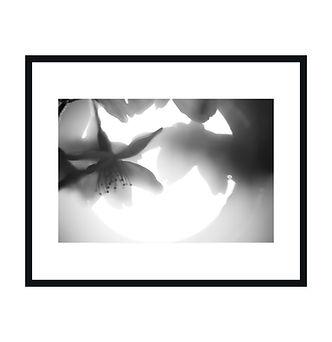 NIGHT FOREST 夜の森 写真集 Zine