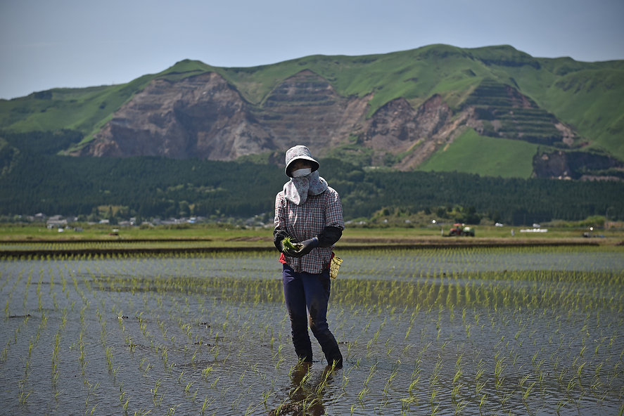 Kumiko Murakami plants rice. The surrounding paddies have suffered cracks or have become unstable, preventing other farmers from doing the same. (Akamizu, Aso City)