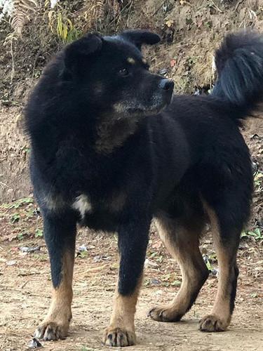 I have deputized this dog #Thimphu #Bhut