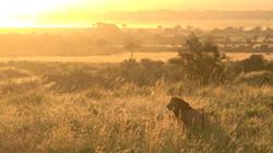 KENYA_0003_2018_2_Kenya
