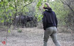 Camp Büffel