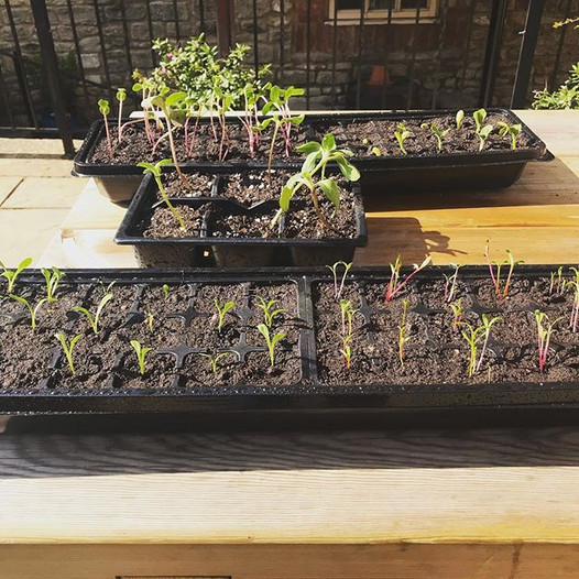 We brought the seedlings outside to the